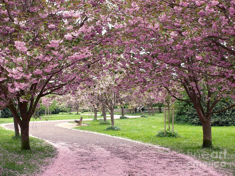 London Photograph - Cherry Blossom In Spring by 1000 Words