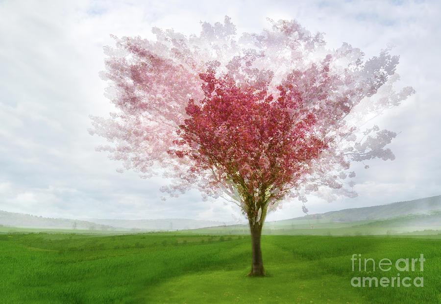 Cherry Blossom by Janet Burdon