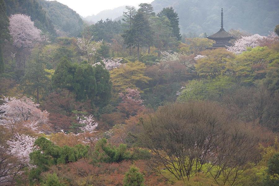 Cherry Blossom With Kiyomizudera Temple Photograph by B. Tanaka