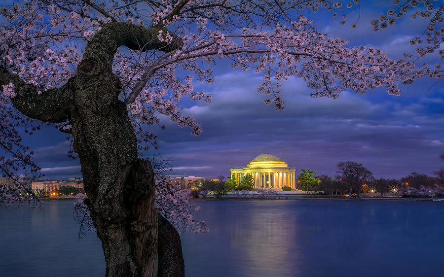 Cherry Photograph - Cherry Blossoms Around The Jefferson Memorial by Hua Zhu
