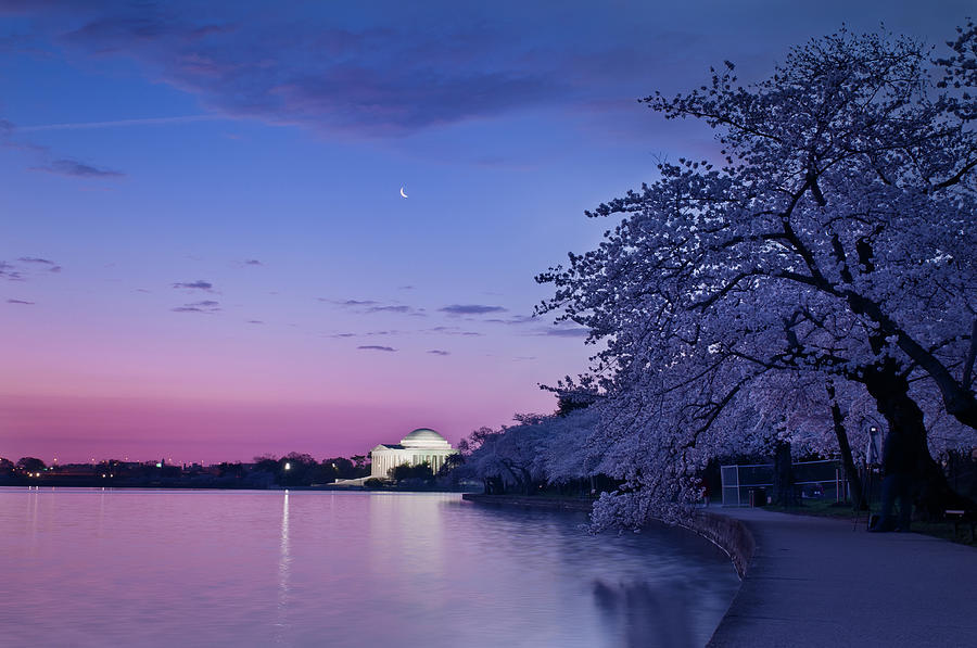 Tidal Basin Photograph - Cherry Blossoms At Twilight by Camrocker