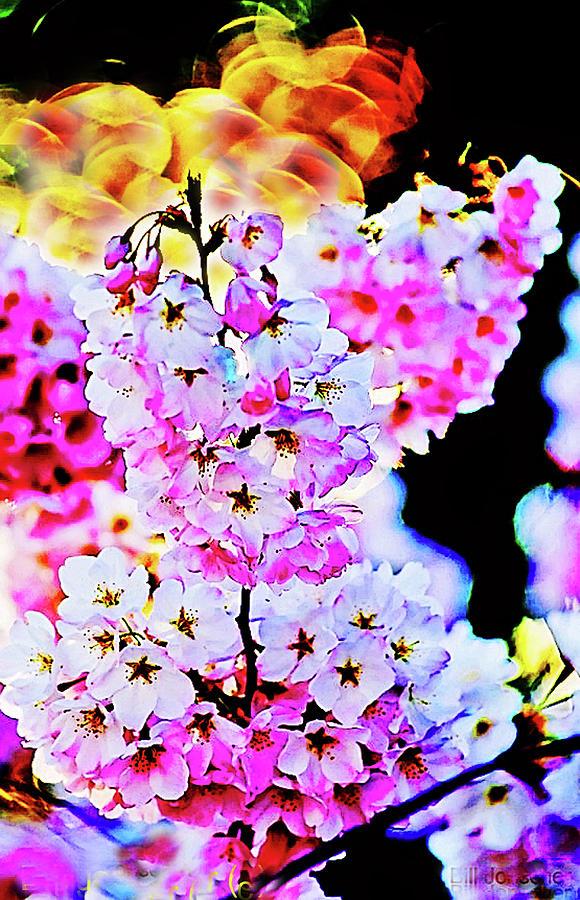 Cherry blossoms close-up #1 by Bill Jonscher