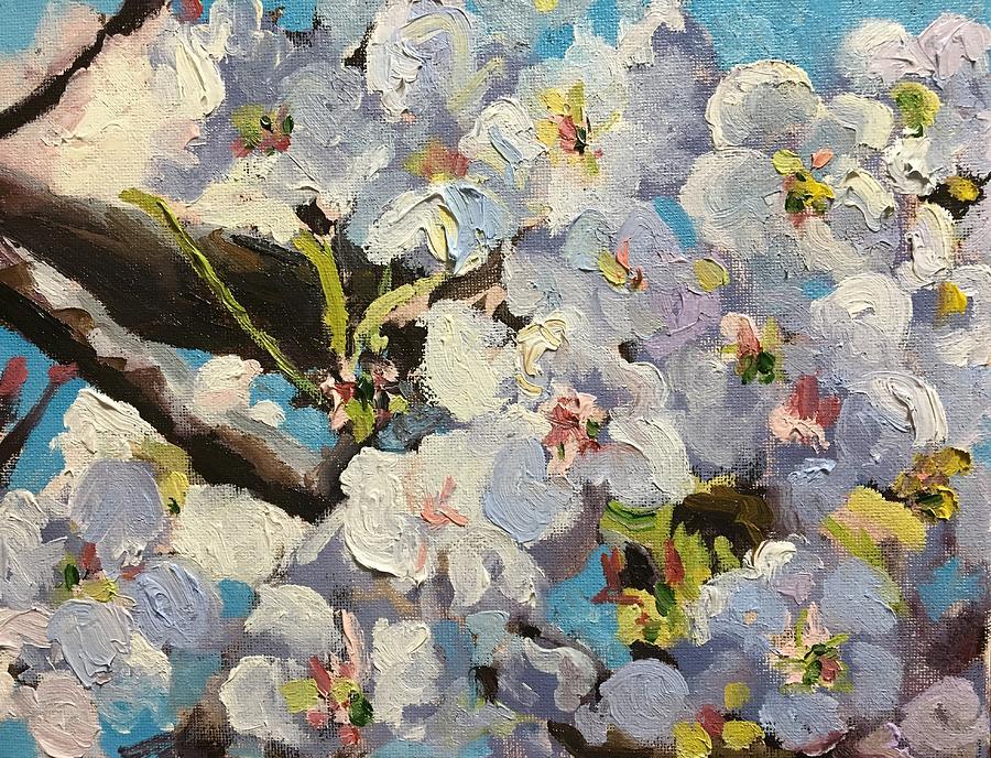 Cherry Blossoms by Susan Elizabeth Jones