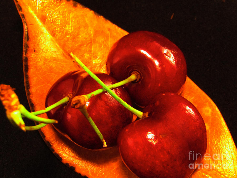 Cherry Leaf by Robert Knight