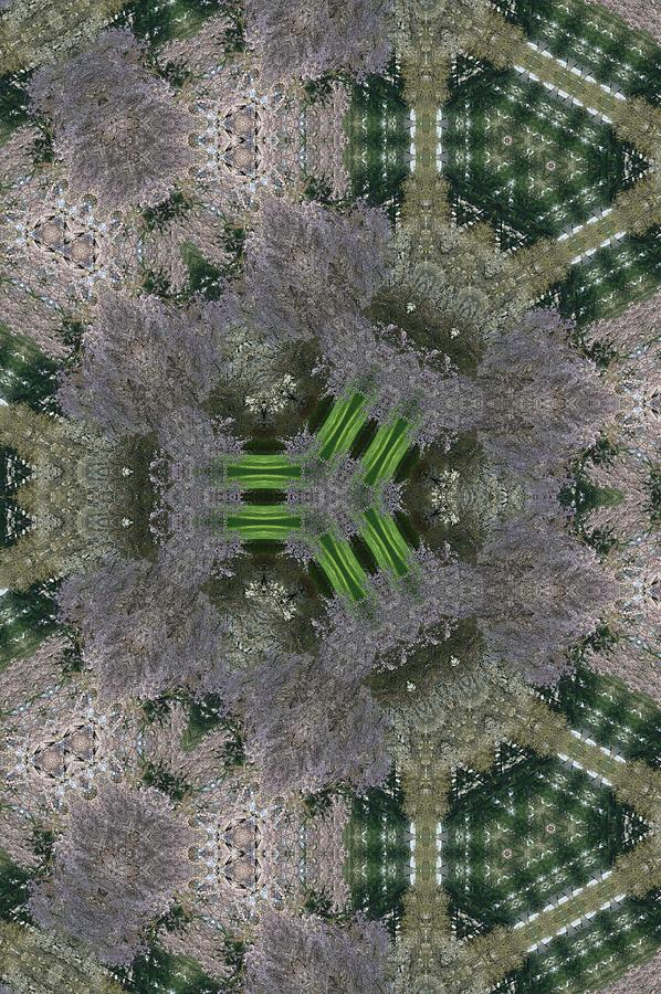 Cherry Tree Kaleidoscope Photograph