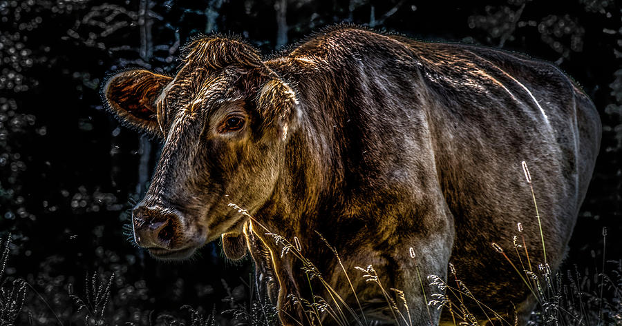 Cheryl Cow by Jerald Blackstock
