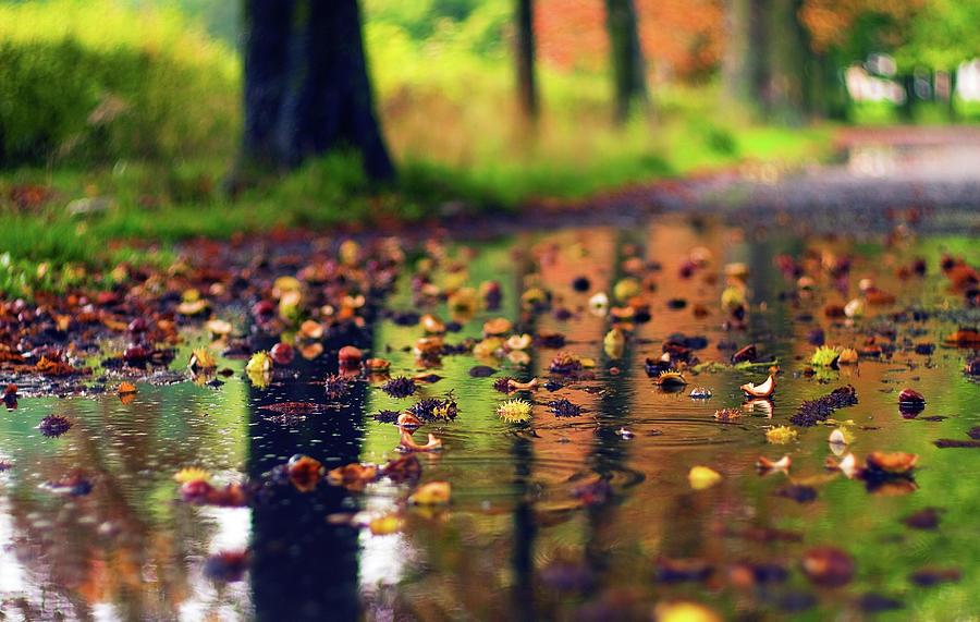 Chestnuts Photograph by Janusz Ziob