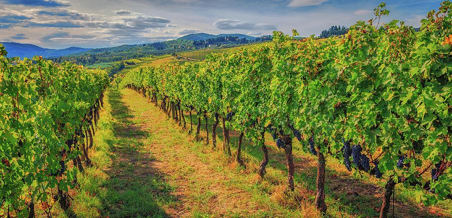 Chianti Wine Country by Lev Kaytsner