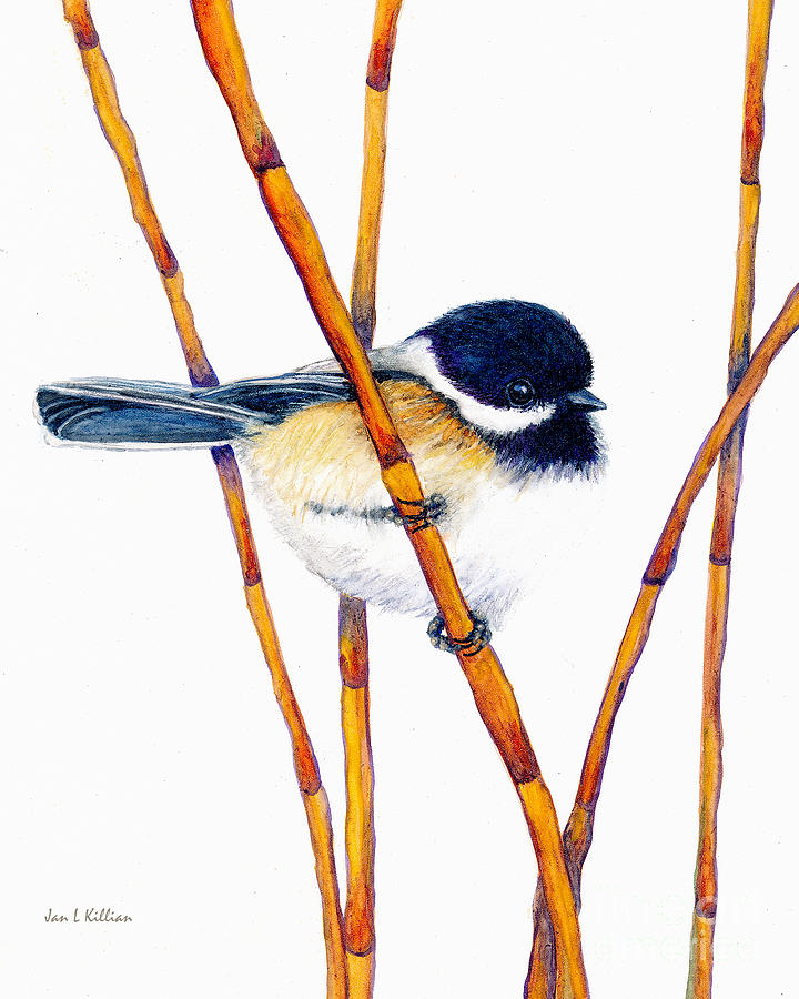 Chickadee Dee Dee by Jan Killian
