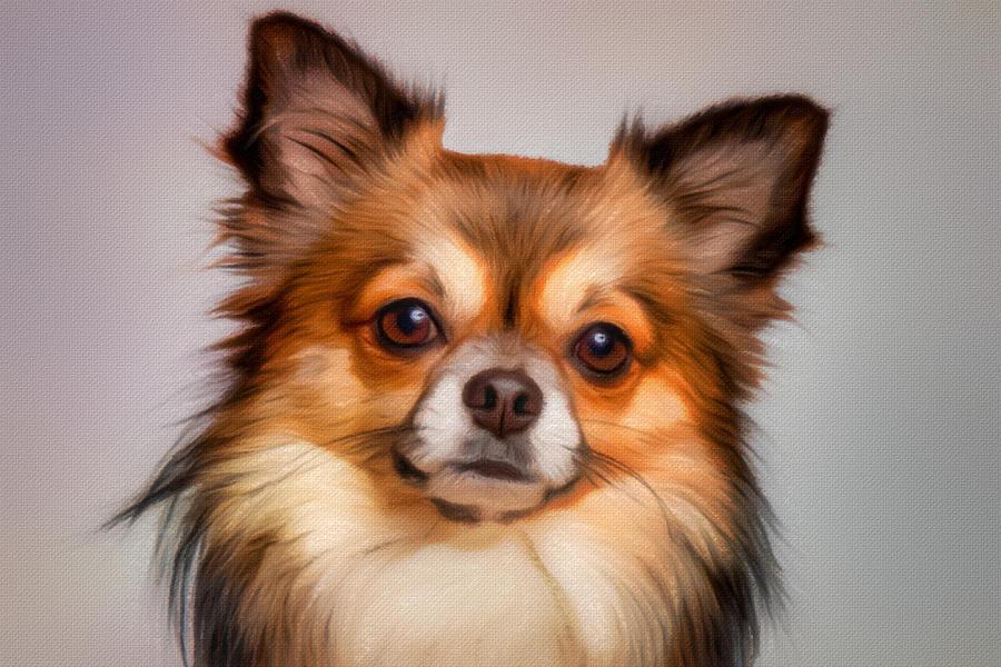 Chihuahua Portrait Painting - Chihuahua dog portrait by Vincent Monozlay