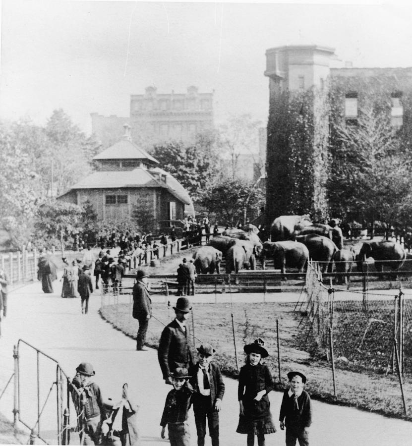 Children In Central Park Zoo Photograph by Hulton Archive