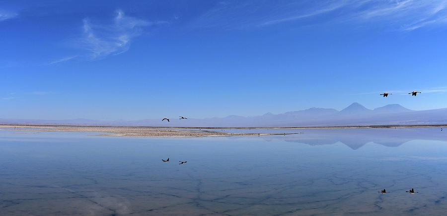 Chile - Chaxa Salt Lagoon - Atacama Desert by Jeremy Hall