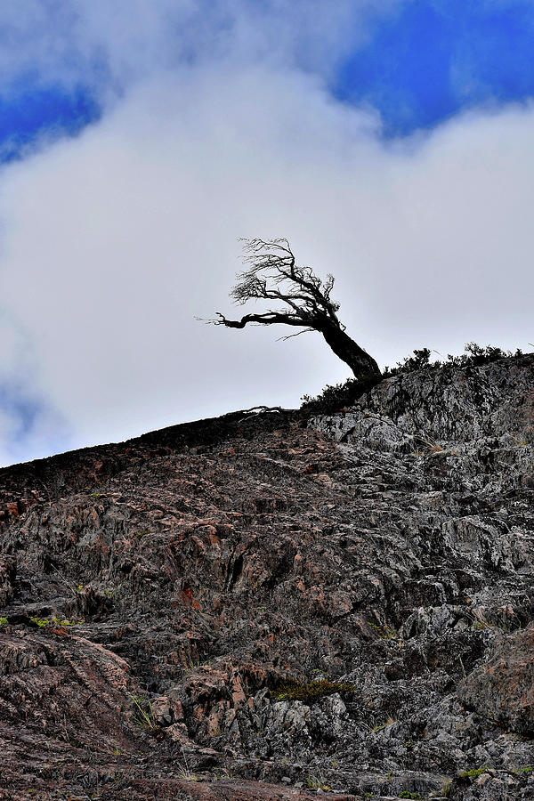 Chile - Wind Stunted Tree - Patagonia by Jeremy Hall