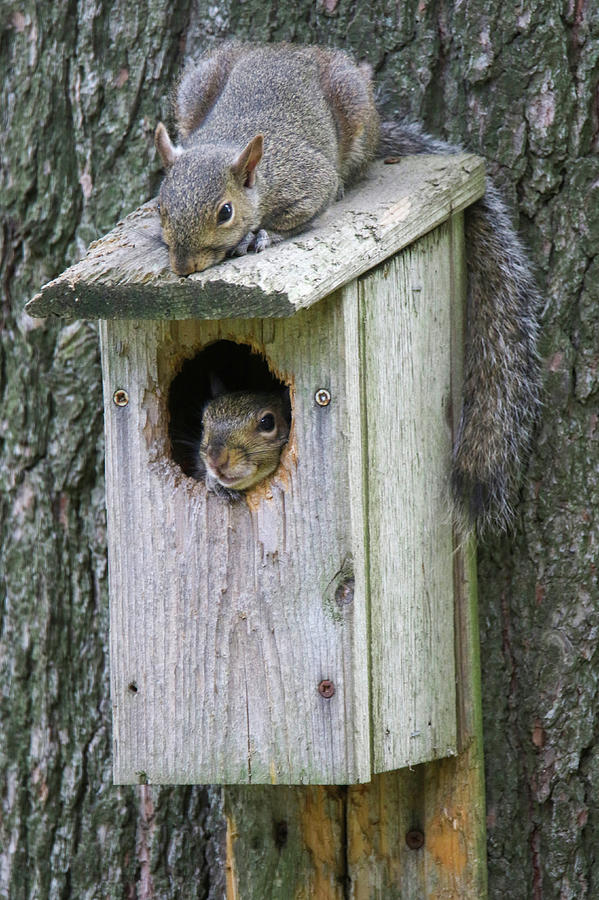 Chillin Squirrels by Brook Burling