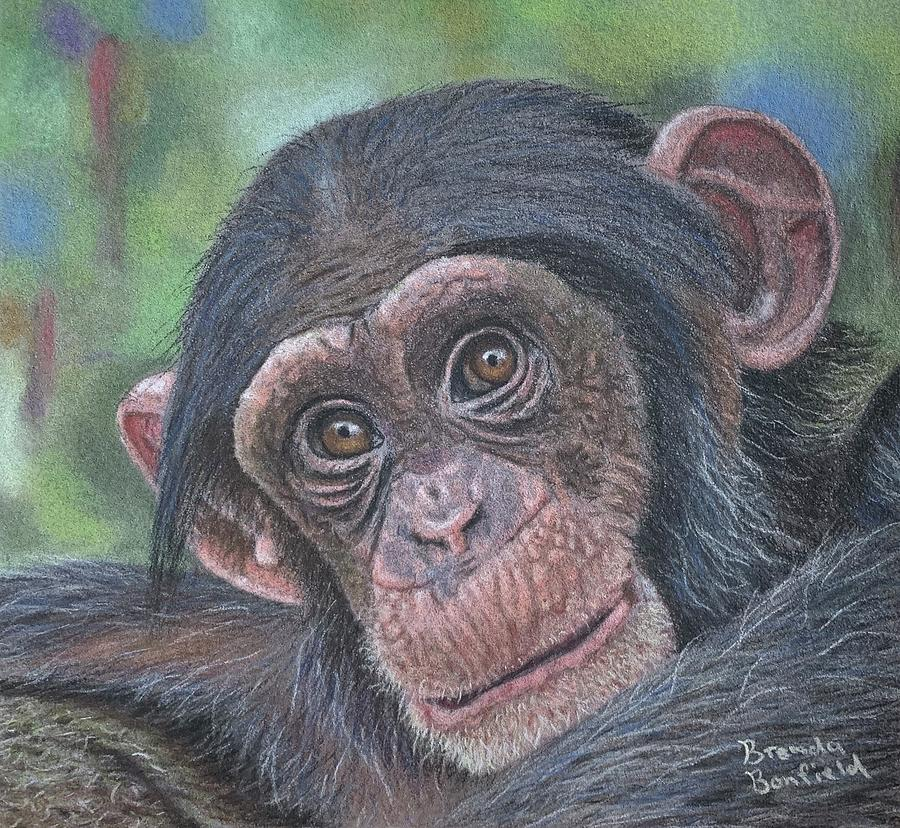 Chimpanzee Cub by Brenda Bonfield