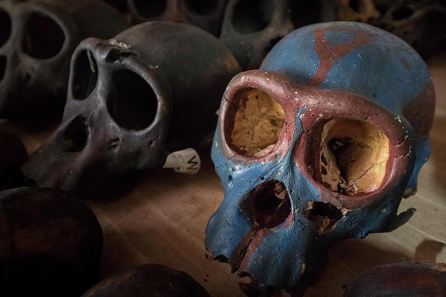 Chimpanzee Skulls Photograph by Gerry Ellis