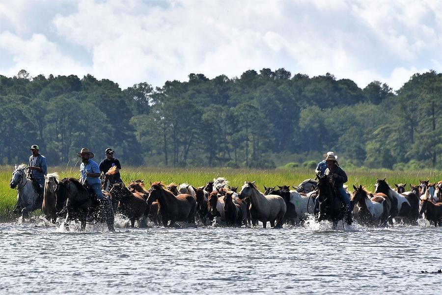 Chincoteague Island Salt Cowboys by Kim Bemis