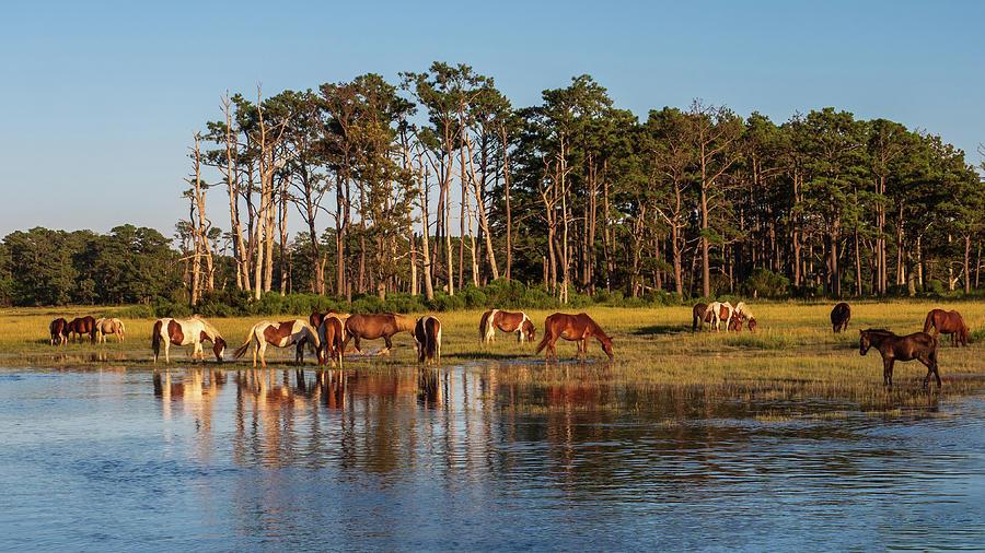 chincoteague Island ponies by Louis Dallara
