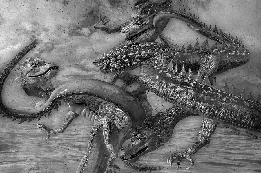 Dragon Digital Art - Chinese Dragons In Black And White by Betsy Knapp