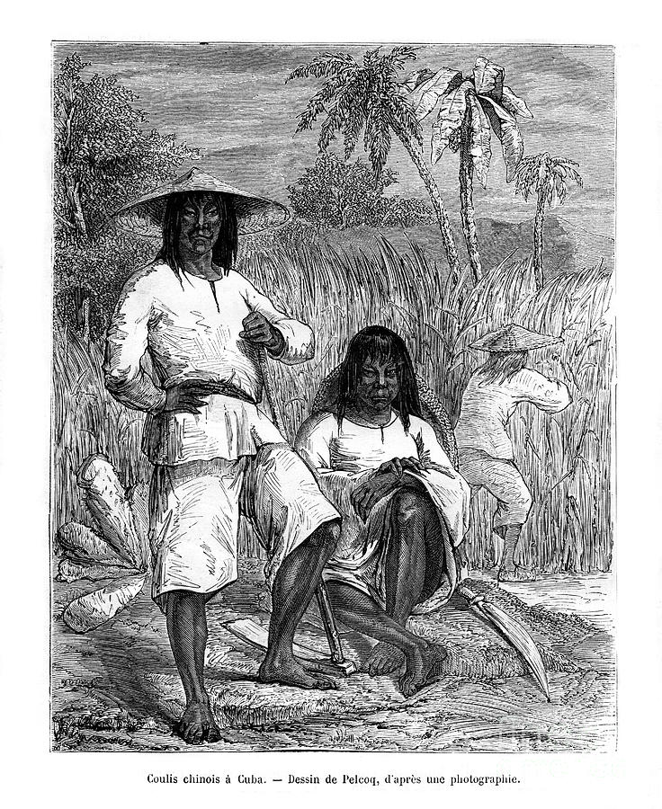 Chinese Workers, Cuba, 19th Century Drawing by Print Collector