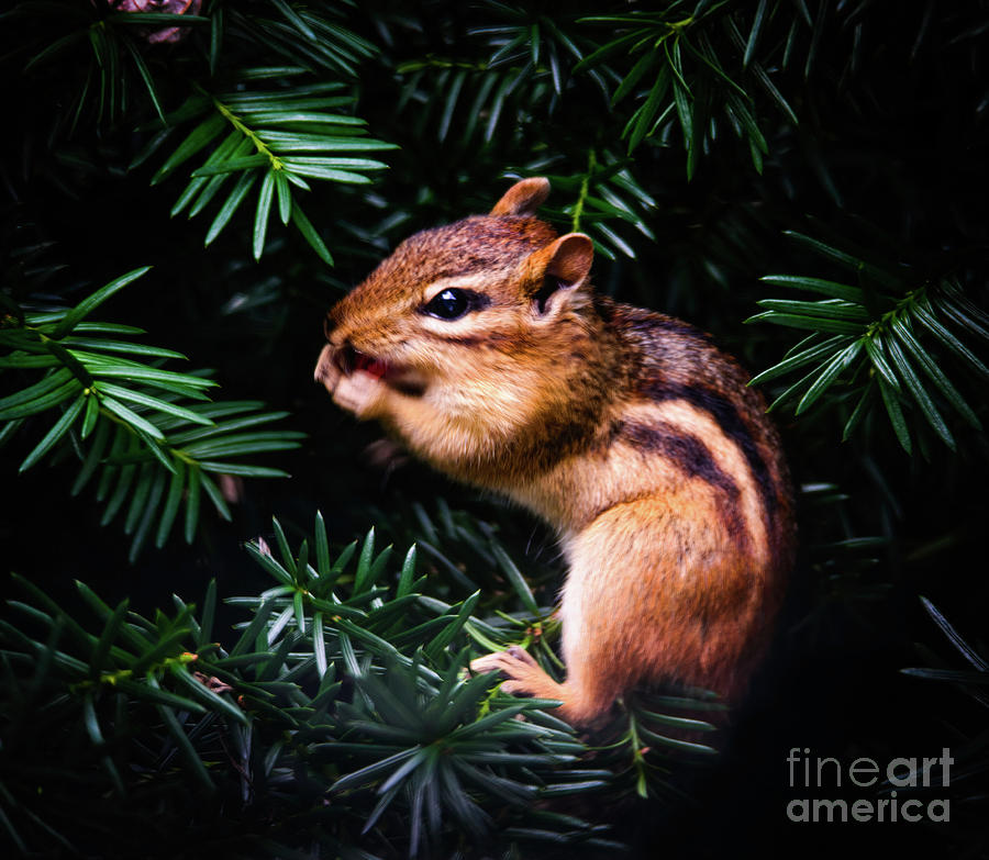 Chipmunk in My Backyard by Randy J Heath