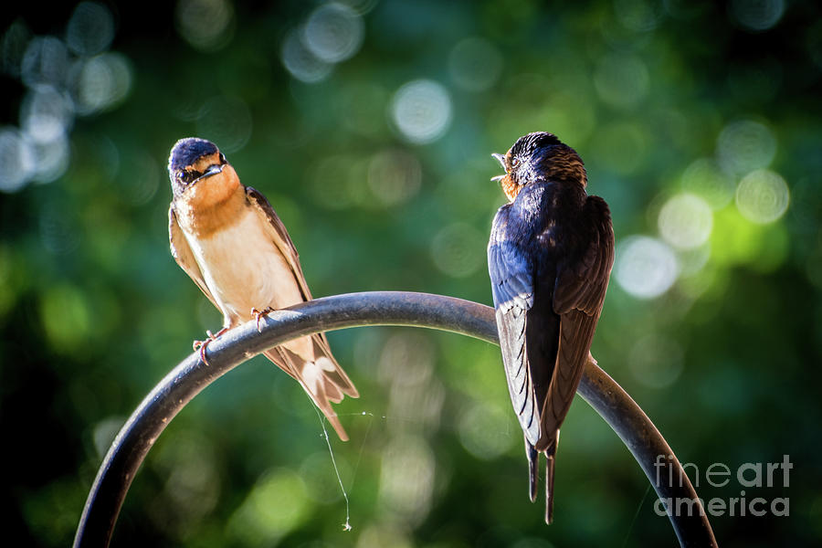 Chirping by Cheryl McClure