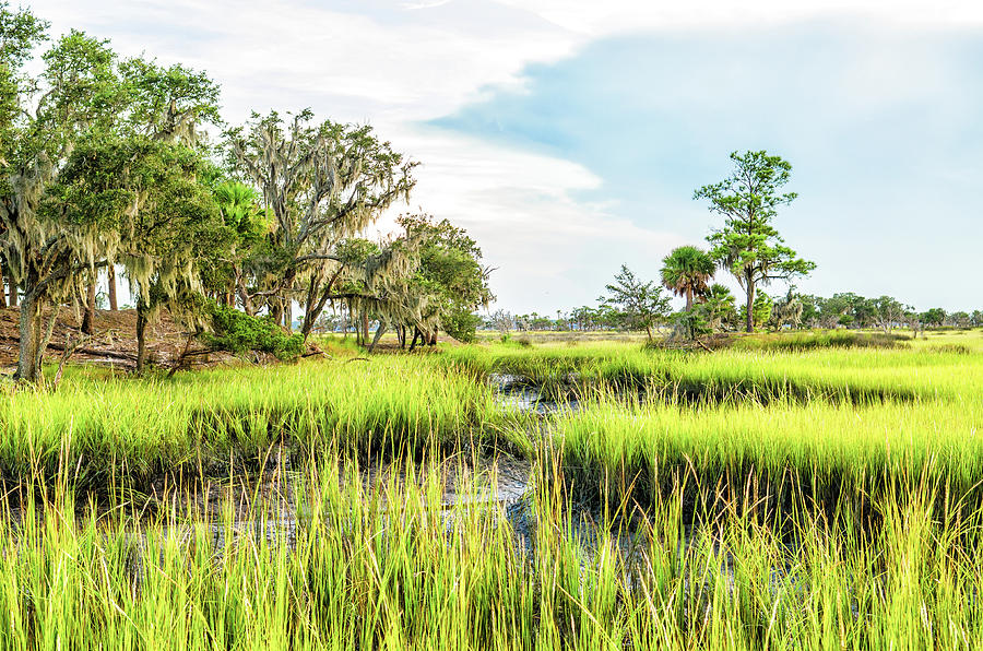 Chisolm Island - Marsh at Low Tide by Scott Hansen