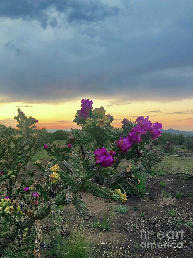 Cholla Sunset by Steven Natanson
