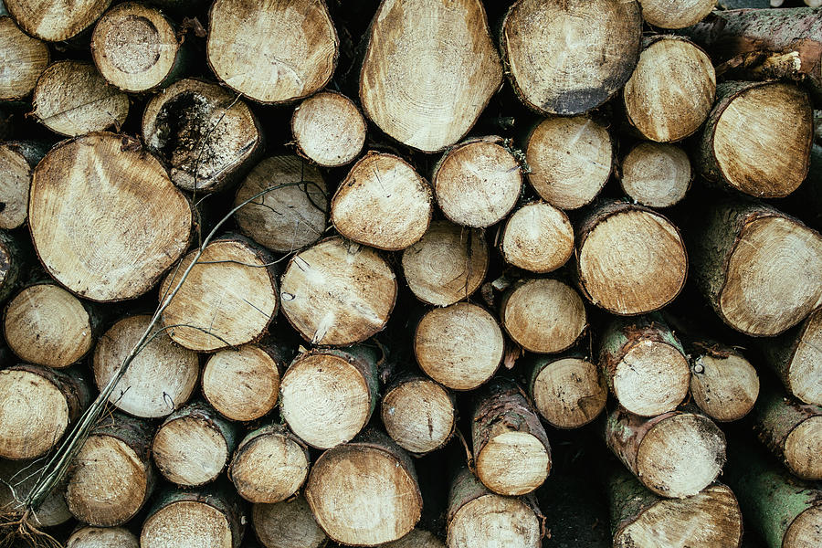 Chopped Wood Logs by Pati Photography