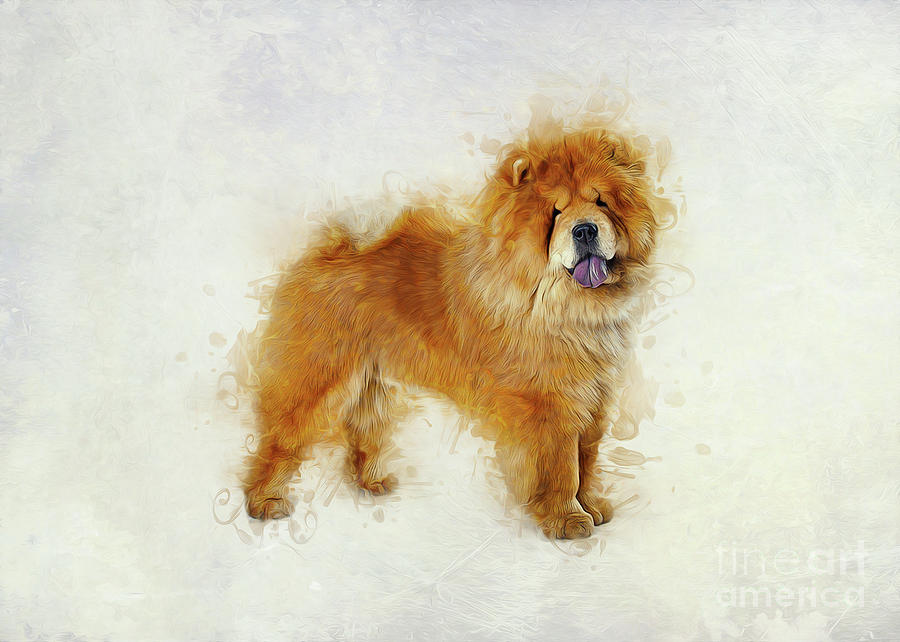 Chow Chow by Ian Mitchell