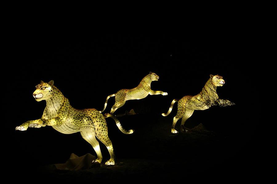 Cheetah Photograph - Christmas At The Living Desert Zoo - Cheetah Family by Colleen Cornelius
