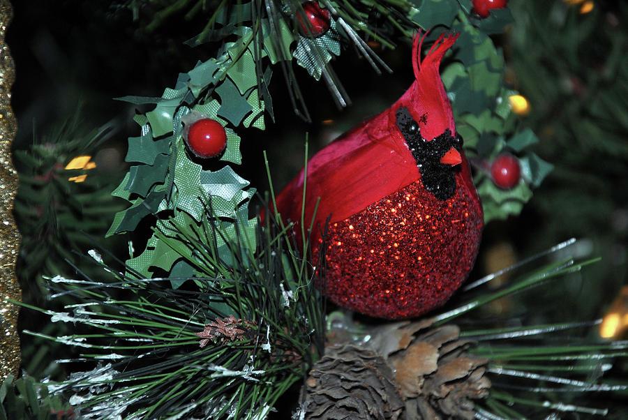 Christmas Cardinals by Lori Moon