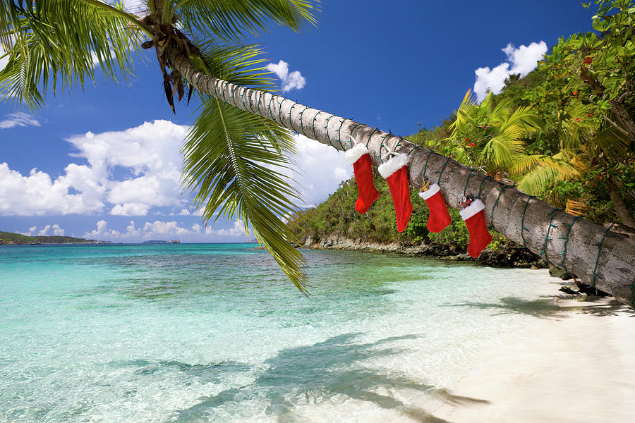 Christmas Decorations On A Palm Tree At Photograph by Cdwheatley