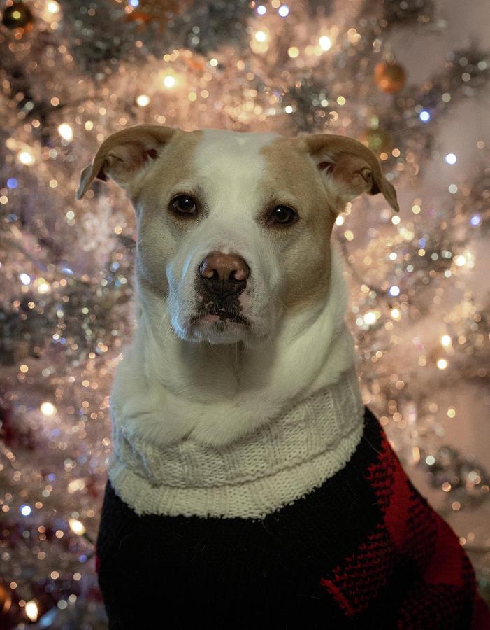Christmas Snofie by Lora J Wilson