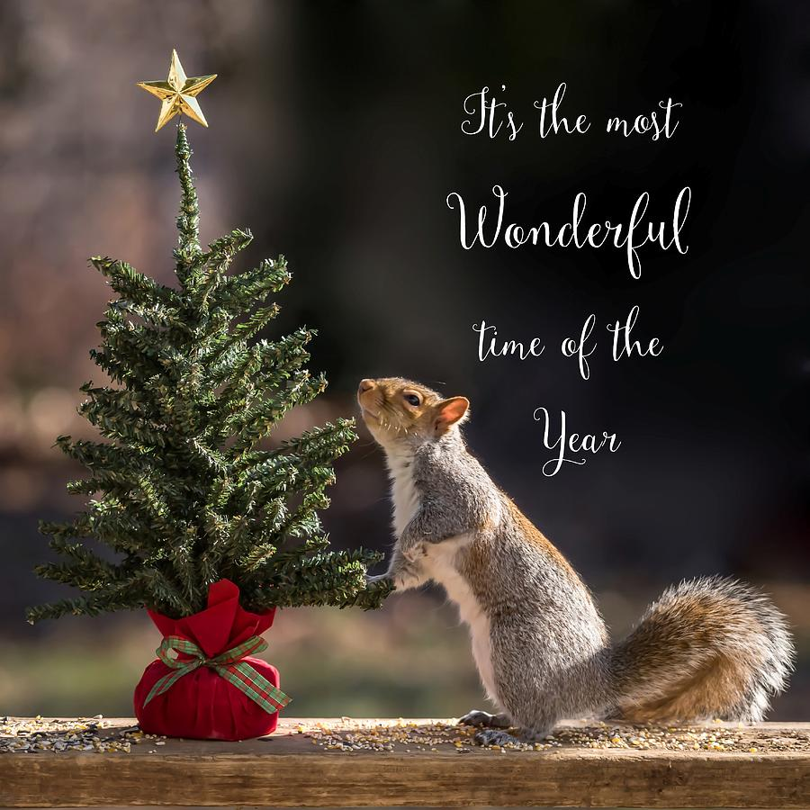 Christmas Squirrel.Christmas Squirrel Most Wonderful Time Of The Year Square