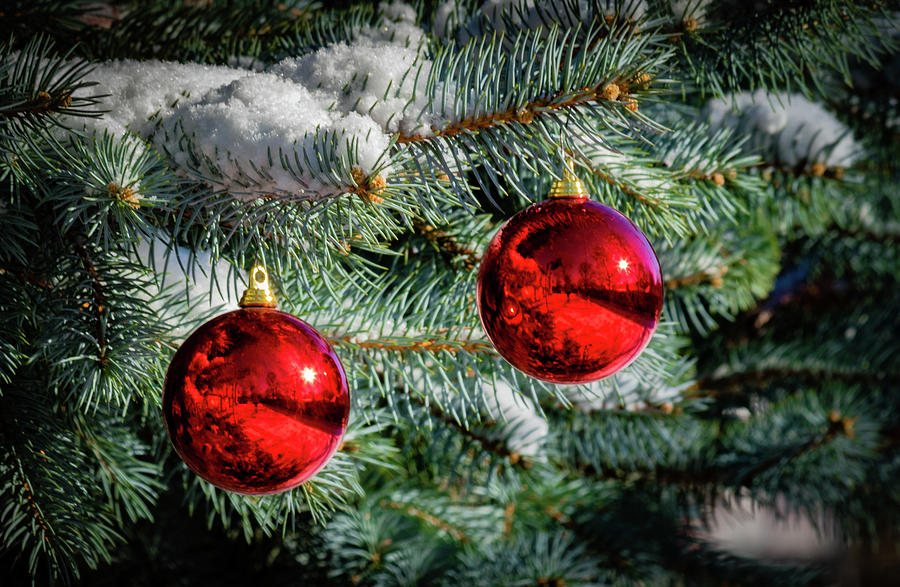 Christmas Tree by Allin Sorenson