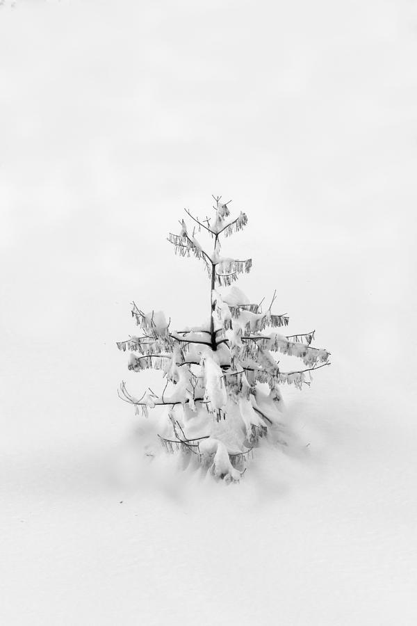 Oh Christmas tree  by Alessandra RC