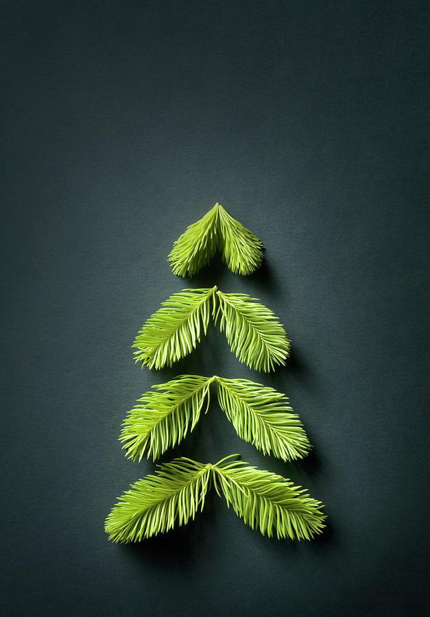 Christmas Tree Photograph by Malerapaso