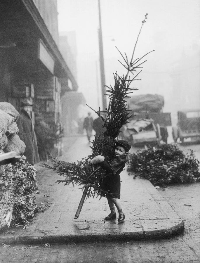 Christmas Tree Shopping Photograph by Hulton Archive