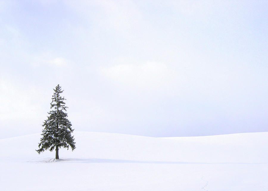 Christmas Tree Photograph by Wallacefsk