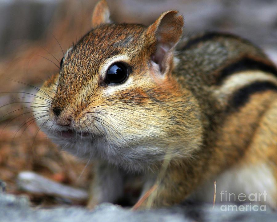 Chubby Cheeks by Jane Axman