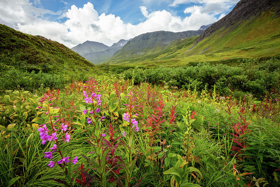 Chugach Midsummer by Tim Newton