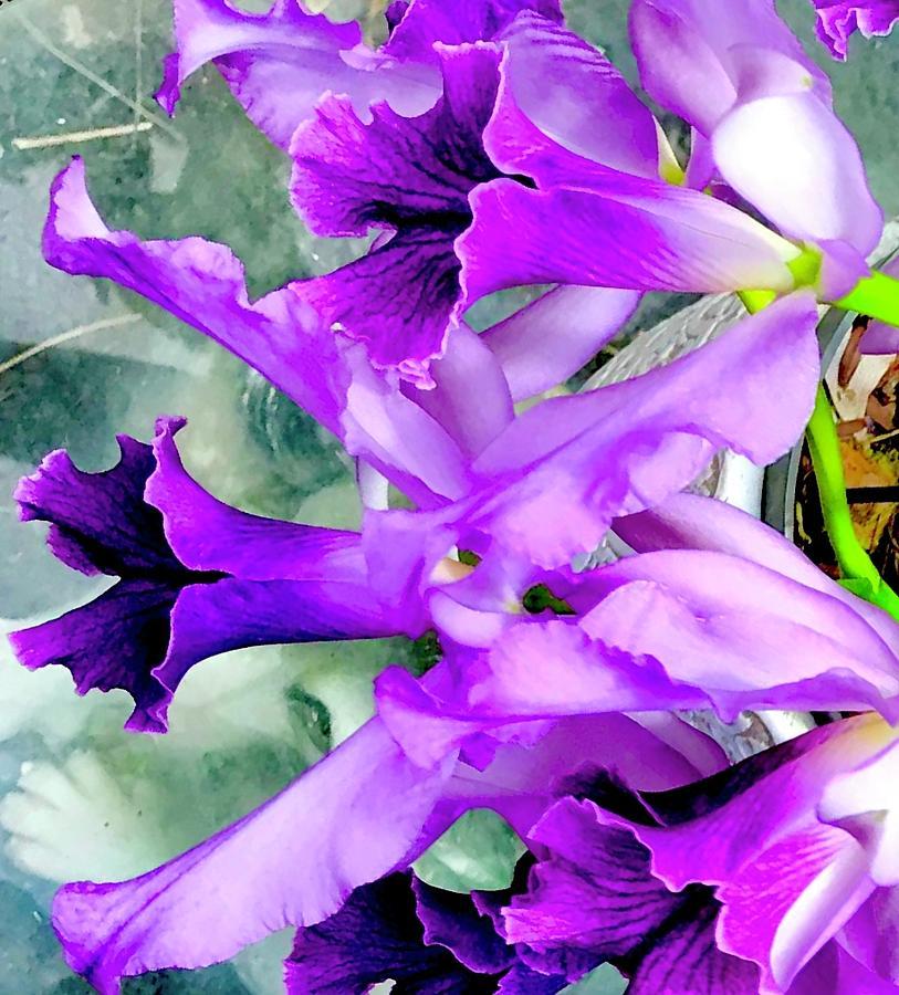 Cindys  Cattleya Orchids Aloha  by Joalene Young