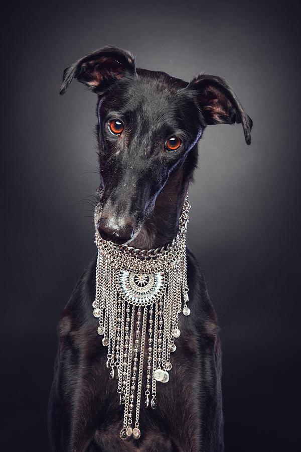 Black Dog wearing necklace by Travis Patenaude