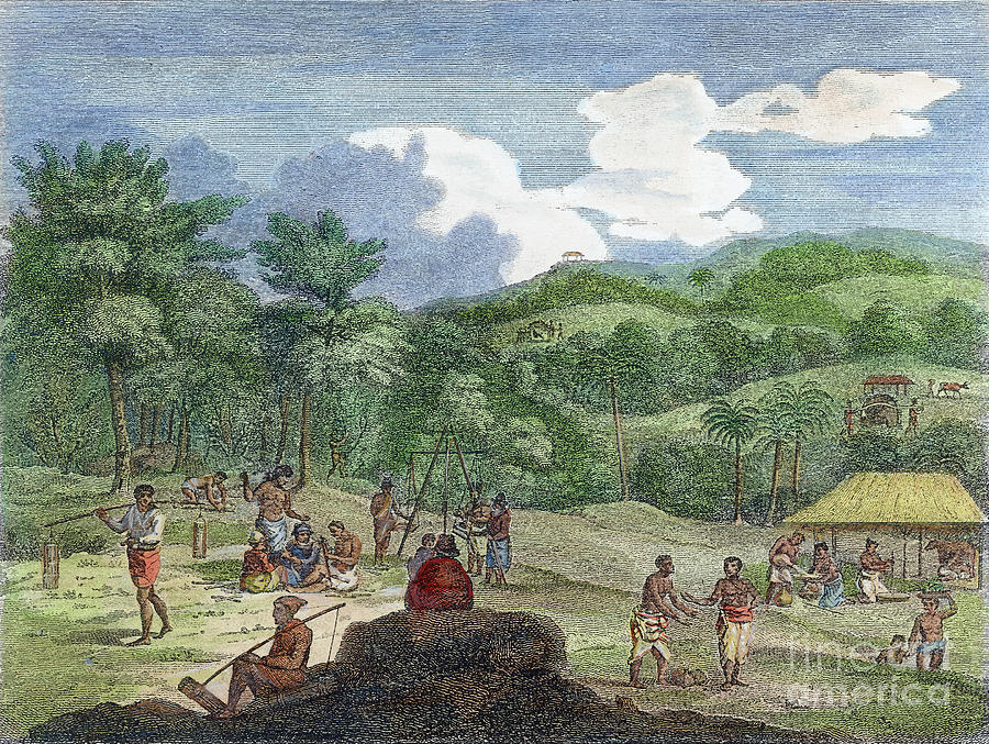 CINNAMON PLANTATION, 1804 by Granger
