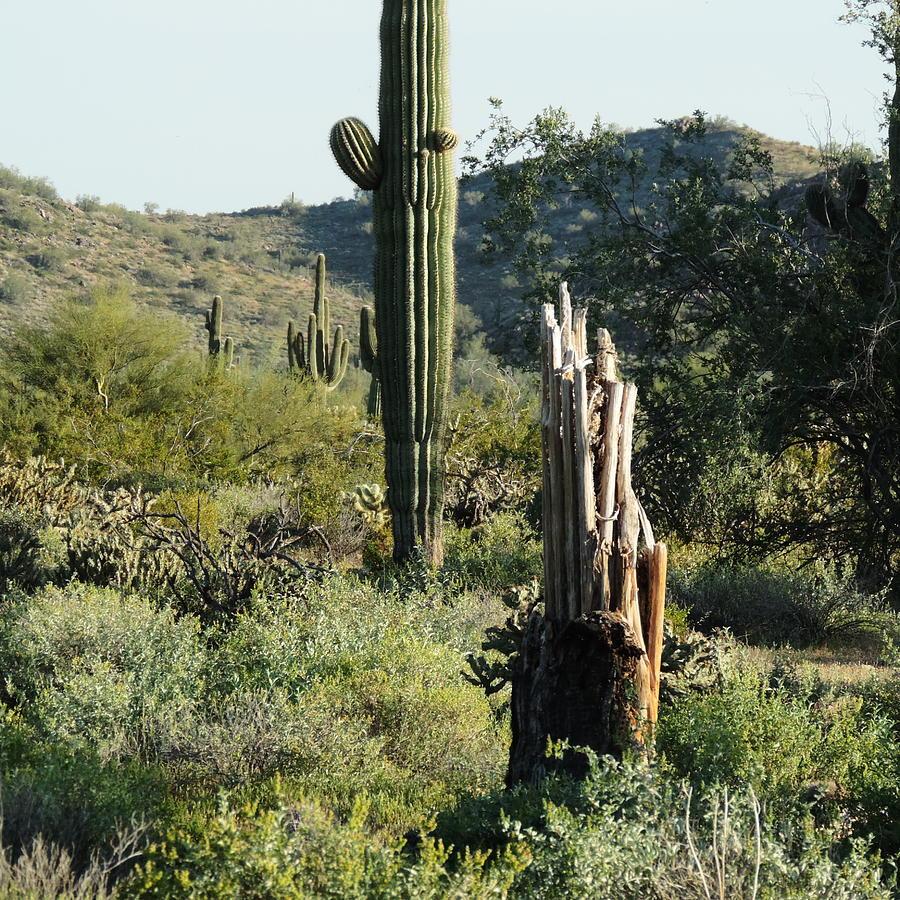 Circle of Desert Life by Bill Tomsa