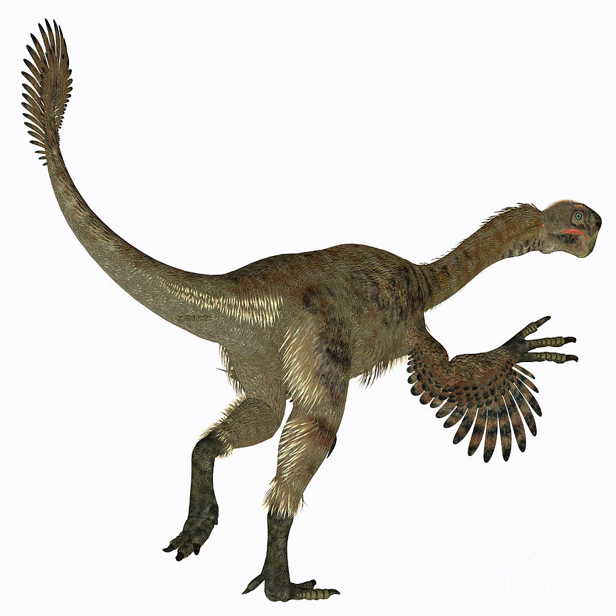 Citipati Female Dinosaur Tail Digital Art