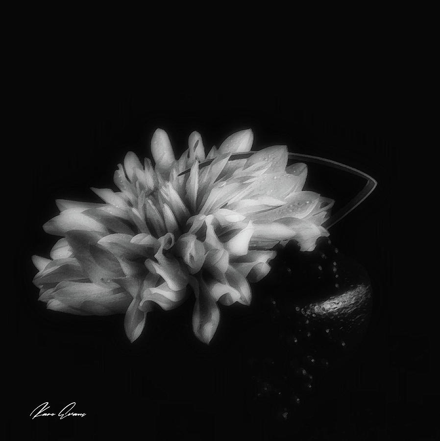 Clair -obscur by Karo Evans