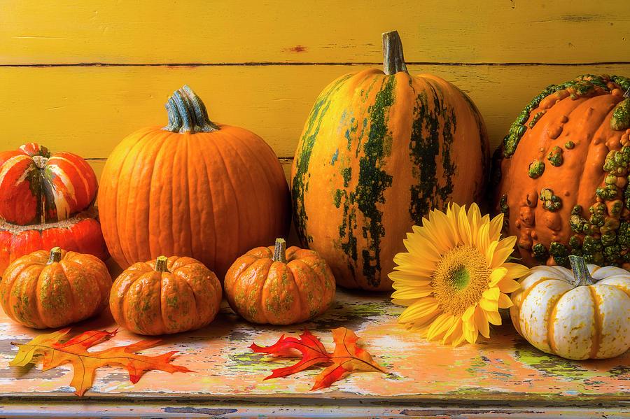 Sunflower Photograph - Classic Autumn Still Life by Garry Gay