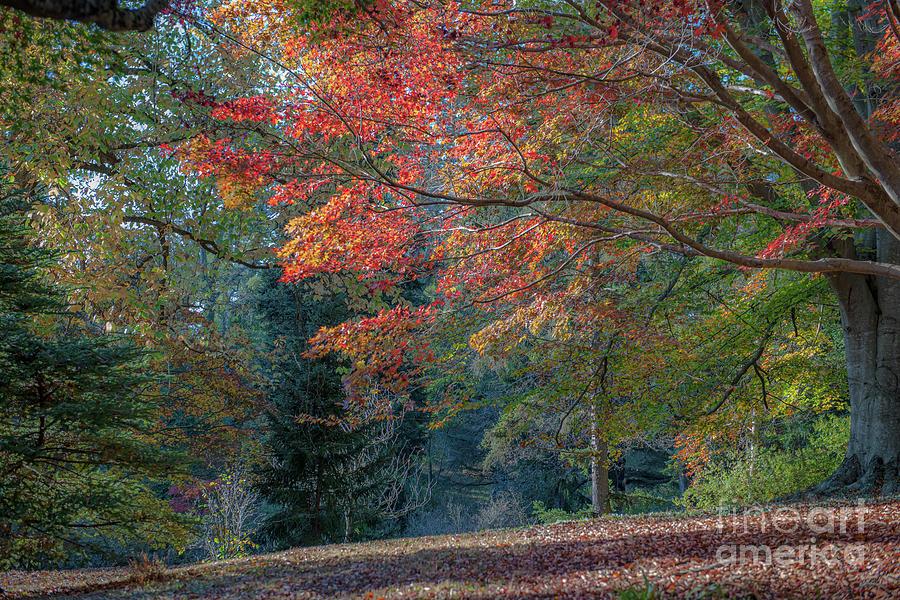 Classically Elegant Autumn Colors Photograph